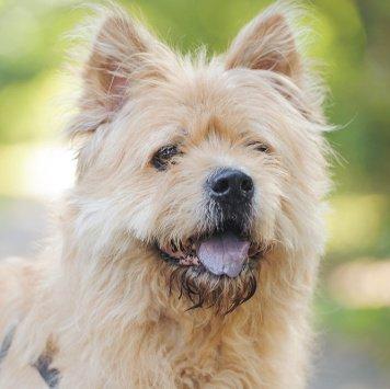 Фима - Собаки в добрые руки
