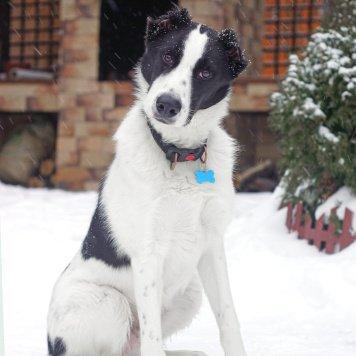 Рион - Собаки в добрые руки