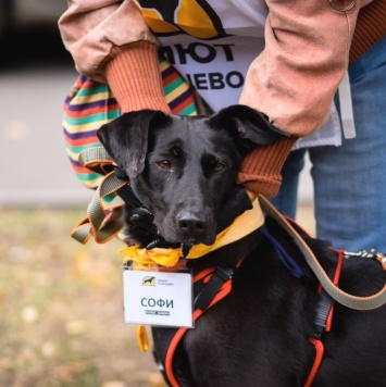 Софья - Собаки в добрые руки
