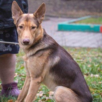 ДастиТоша - Собаки в добрые руки