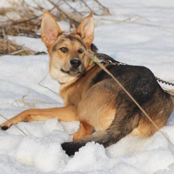 Янтарь - Собаки в добрые руки