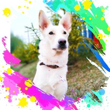 Бэлла-Белоснежка - Собаки в добрые руки