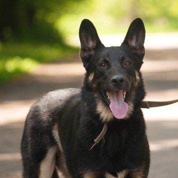 Тимур - Собаки в добрые руки