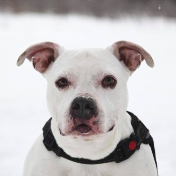 Джульетта - Собаки в добрые руки