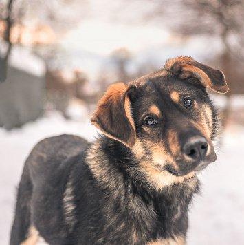 Гек - Собаки в добрые руки