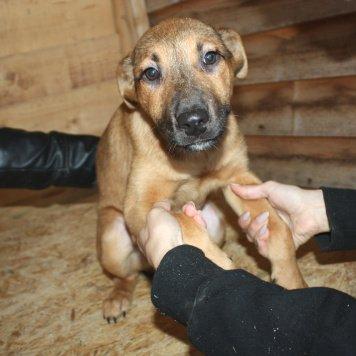 Бриджи - Собаки в добрые руки