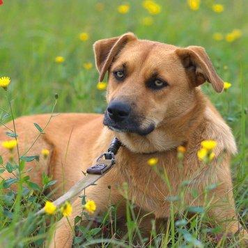 Сонька - Собаки в добрые руки