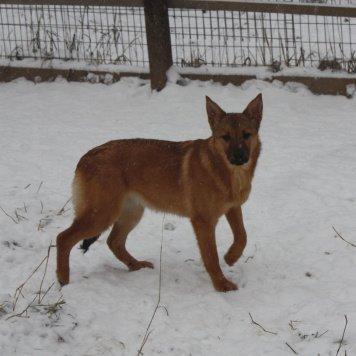 Донна - Собаки в добрые руки