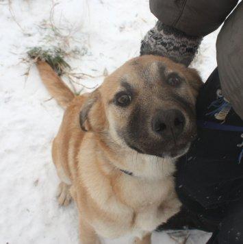 Айка - Собаки в добрые руки