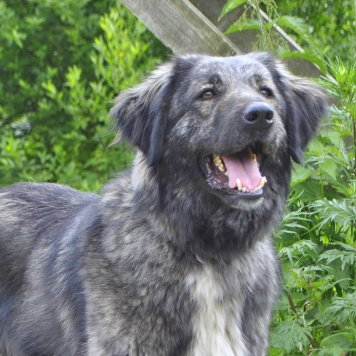 Михалыч - Собаки в добрые руки