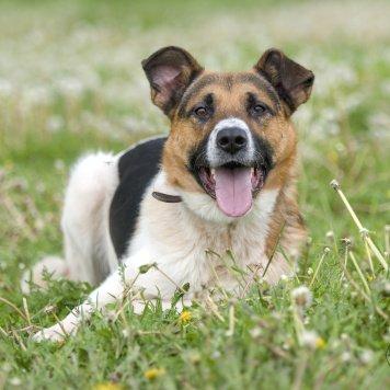 Ридж - Собаки в добрые руки