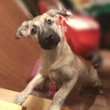 Маркоша - Собаки в добрые руки