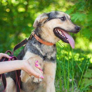 Милана - Собаки в добрые руки
