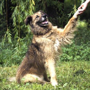 Пират - Собаки в добрые руки