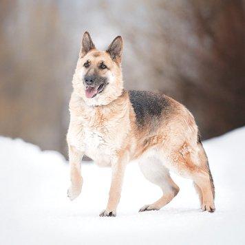 Ливви - Собаки в добрые руки