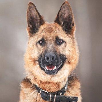 Шакти - Собаки в добрые руки