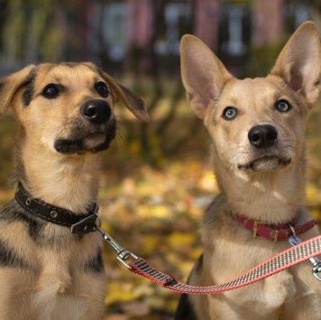 Алиса и Сканя - Собаки в добрые руки