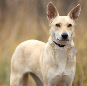 Ванилька - Собаки в добрые руки