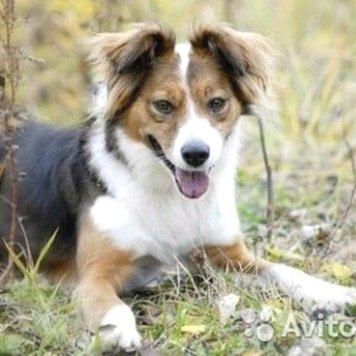 Касья - Собаки в добрые руки