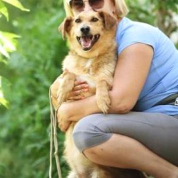 Басня - Собаки в добрые руки