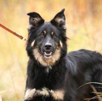 Бумер - Собаки в добрые руки
