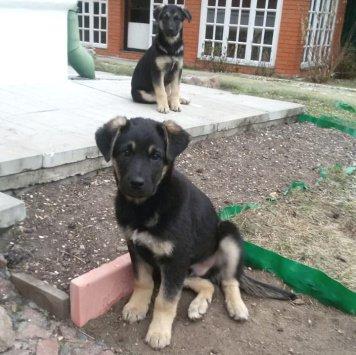 Малышь - Найденные собаки