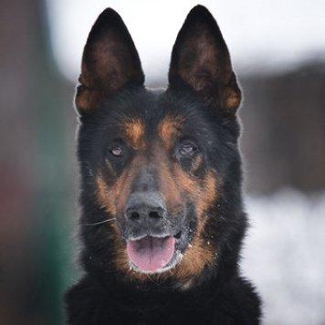 Арго - Собаки в добрые руки