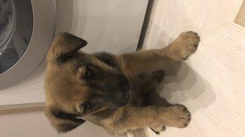 Бакстер - Найденные собаки