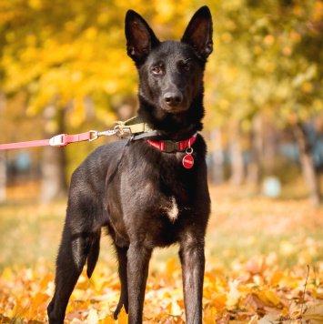 Сэм - Найденные собаки