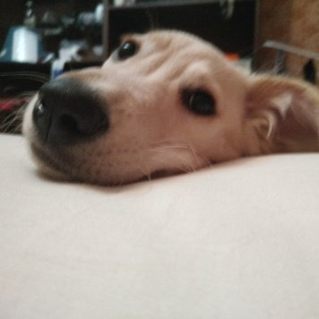 Щенок - Найденные собаки