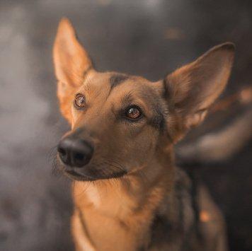 Анфиса - Собаки в добрые руки