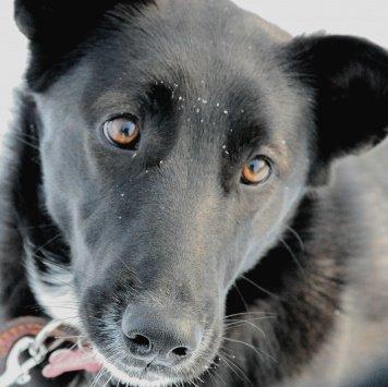 Дара - Собаки в добрые руки