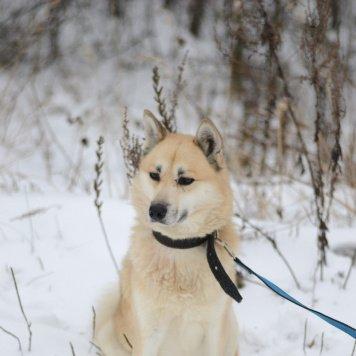 Миракл - Найденные собаки