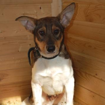 Рудик - Собаки в добрые руки