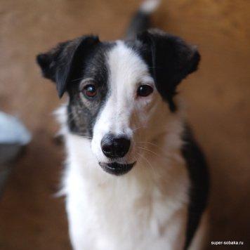 Крошка Кепка - Собаки в добрые руки