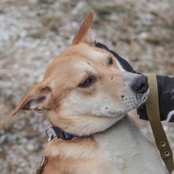 Добрыня - Собаки в добрые руки