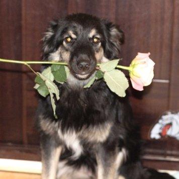 Кэрри - Собаки в добрые руки