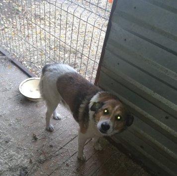 Михалыч - Найденные собаки