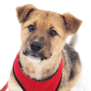 Филимон - Собаки в добрые руки