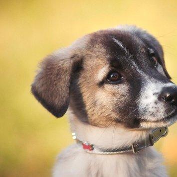 Сонечка - Собаки в добрые руки
