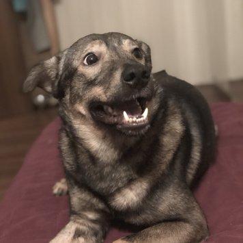 Джефри - Собаки в добрые руки