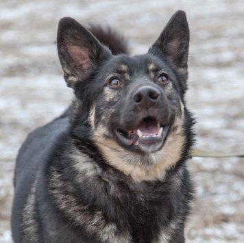 Гамлет - Собаки в добрые руки