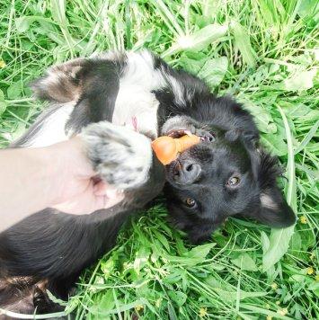 Нуар - Собаки в добрые руки