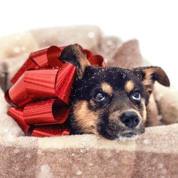 Дакота - Собаки в добрые руки