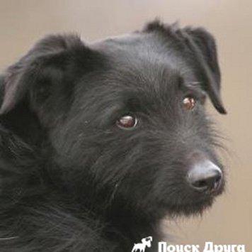 Кляксик - Собаки в добрые руки