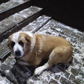 Афина - Найденные собаки