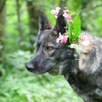 Агита - Собаки в добрые руки