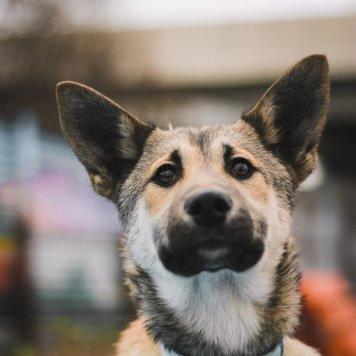 Вуппи - Собаки в добрые руки