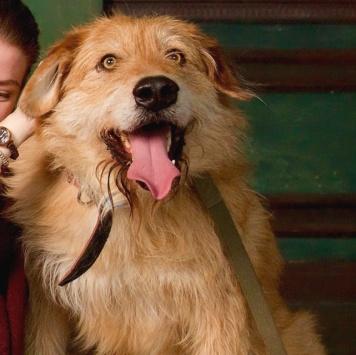Ухо - Собаки в добрые руки