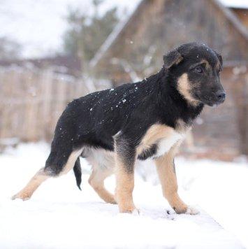 Элвис - Собаки в добрые руки